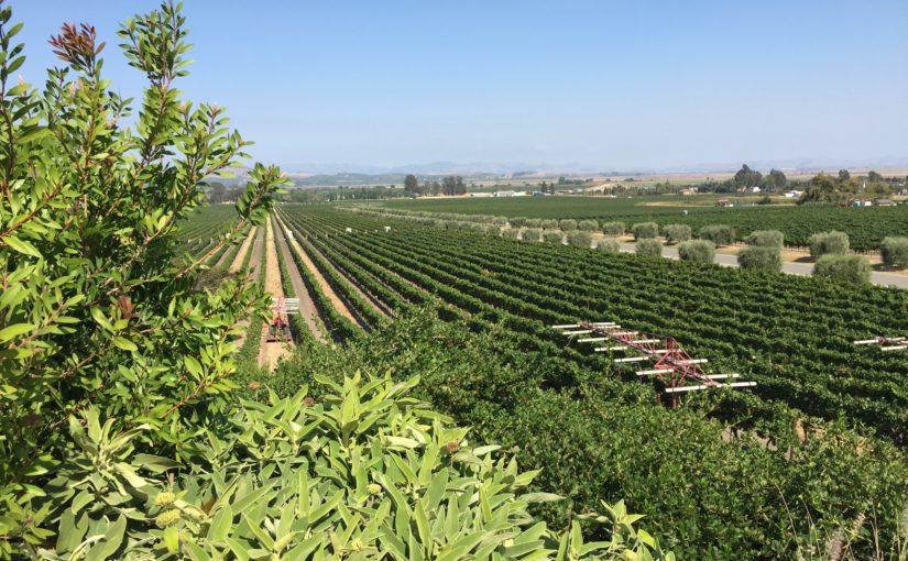 Gloria Ferrer Winery, Sonoma Valley