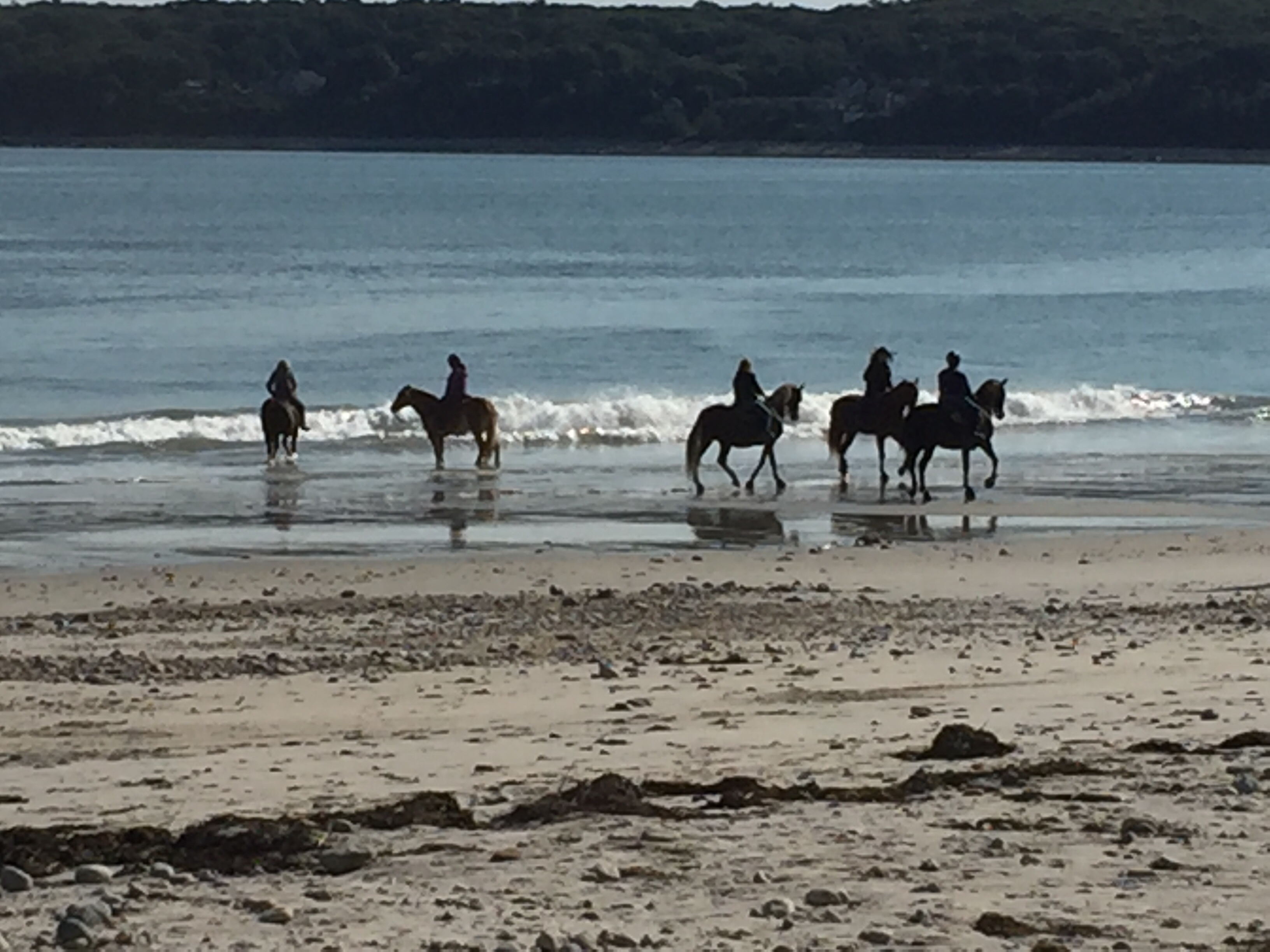 Plymouth Massachusetts Horseback riding